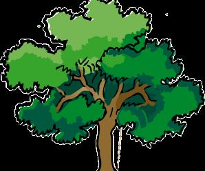 Diagrama de arbol funcion y aplicacion